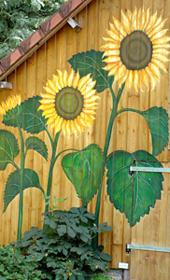 zonnebloemen nki 300x170