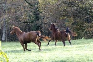paarden 300x450